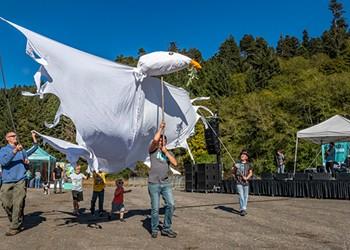 Happy Birthday, Redwood National Park