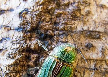 HumBug: Bugs in the Wood