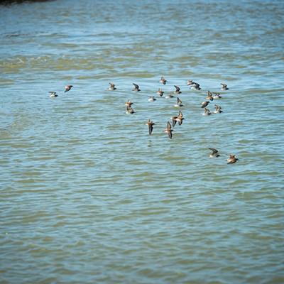 King Tide at the Arcata Marsh