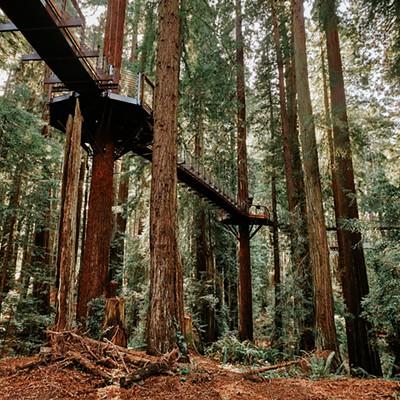Sequoia Park Zoo Redwood Skywalk