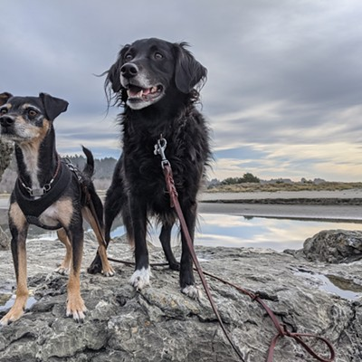 Photo Contest 2021 - Dogs