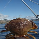 SECOND UPDATE: Warning Issued on Dungeness Crab After Testing Shows Toxin