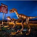 North Coast Night Lights: Raptors at Chapman's Gem and Mineral