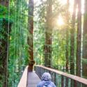 Redwood Sky Walk Grand Opening Events Set