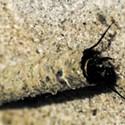 Bugs in Winter