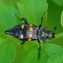 HumBug: Bugs at the Refuge