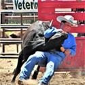 Rodeo Bucks Along