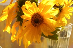 PHOTO BY KATIE MCGOURTY - Homegrown sunflowers to brighten up the house.