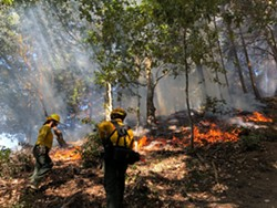 The prescribed burn in action. - Uploaded by Sanctuary Forest