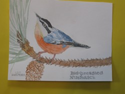 First Place, Grades 5&6: Lily Bazemore, Union Street Charter, Red-breasted Nuthatch