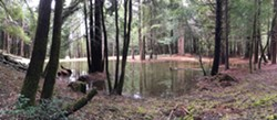 Baker Creek Ponds: The String of Pearls - Uploaded by Sanctuary Forest