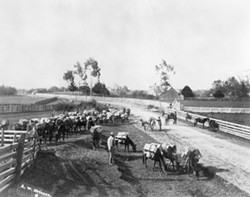 Alliance Pack Train, Photo courtesy of HSU Humboldt Room Special - Collection