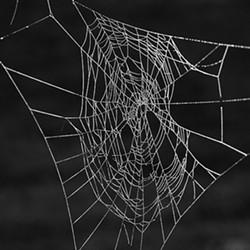 Orb Weaver web - Uploaded by Denise Seeger