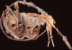 Mask - Uploaded by Jenny A