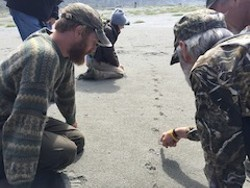 Looking at tracks in the sand - Uploaded by Melinda Bailey
