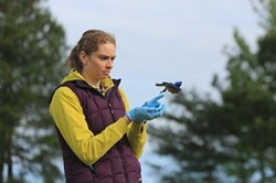 STEVE SALPUKAS - Heather Kenny releasing a male bluebird