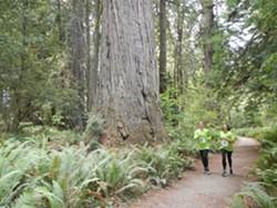 run_in_the_redwoods_runners.jpg