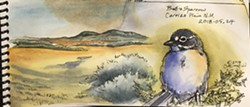 Watercolor of Bell's Sparrow - Uploaded by Denise Seeger