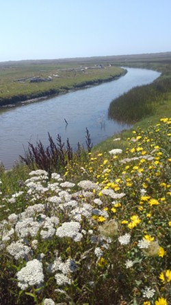 Eel River Estuary Preserve - Uploaded by Denise Seeger