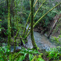 Vanauken Creek, Mattole River Watershed - Uploaded by Sanctuary Forest