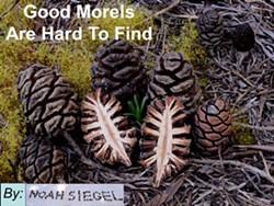 Morels - Uploaded by rpalomera