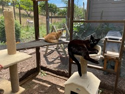 Cats relaxing in their Catio Photo Submitted by RRAS