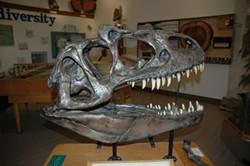 Allosaurus replica - Uploaded by Melinda Bailey