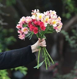 PHOTO CREDIT TREVOR SHIRK. - a mixed bouquet of garden fresh Alstroemeria: 'Rosea', 'Champagne', and 'Inticancha Red'.