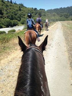 PHOTO BY AMY BARNES - A trail ride in Redwood National Park.