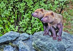 dd5132dc_greg_nyquist_bush_dogs-1140x400.jpg