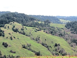 PHOTO BY LINDA STANSBERRY - Little green firs eating up open land in Southern Humboldt.