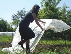 PHOTO BY HEATHER JO FLORES - Row covers are important to protect melons in a temperate climate.