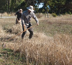 PHOTO BY CARRIE PEYTON DAHLBERG - Jacob Pressey scythes and Matt Kruskamp rakes at their beer farm in McKinleyville.