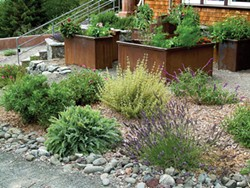 PHOTO BY DONNA WILDEARTH - A well-mulched planting area filled with plants requires minimal weeding.