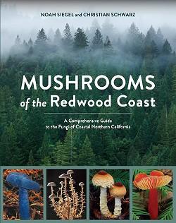 04f701e5_redwoods.jpg