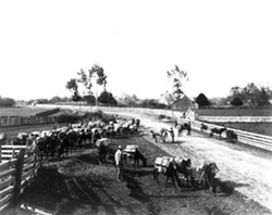 HUMBOLDT COUNTY HISTORICAL SOCIETY - Brizard mule train at Alliance Corners. The mules were loaded in Arcata, then a first stop was made at Alliance Corners to readjust the packs.