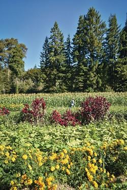 DREW HYLAND - Pepperwood's Flood Plain Produce