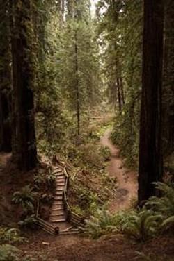 9b8e561b_trail_at_sequoia.jpg