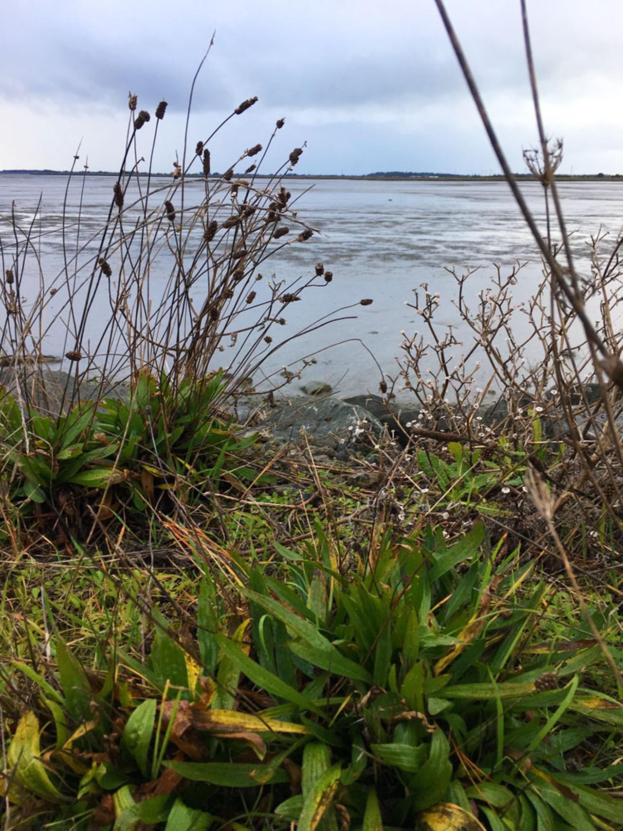 wild medicine get out north coast journal