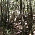 Un-entered Forest