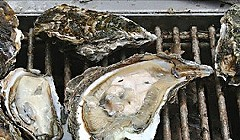 Updated: San Francisco Company Looking to Grow Oysters in Humboldt Bay