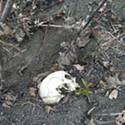 UPDATED: Skull Found on Eel River