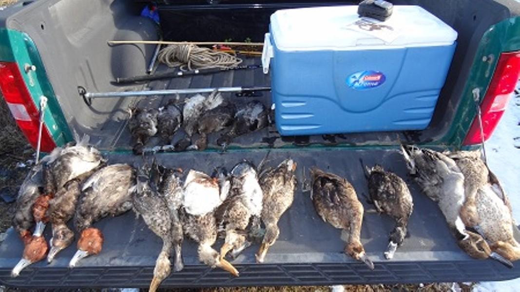 resized-pic-of-killed-ducks.jpg