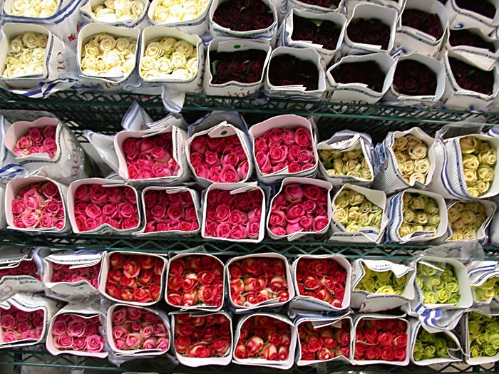 Wholesale Roses. Photo by Amy Stewart.