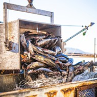 Waiting to fish: New regulations delayed the 2020-21 Dungeness crab season, forcing crab fishermen to rely on staples like black cod