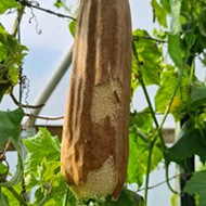 The Luffa Farm in Nipomo will teach you something new about nature's sponge