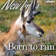 Where the antelope play