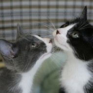 Adopt a cat or kitten July 19 or 26 outside PETCO in SLO Town!