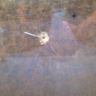 A projectile goes through a window at Supervisor Caren Ray's home
