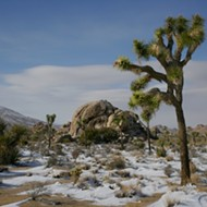 Joshua Tree National Park is a draw for artists